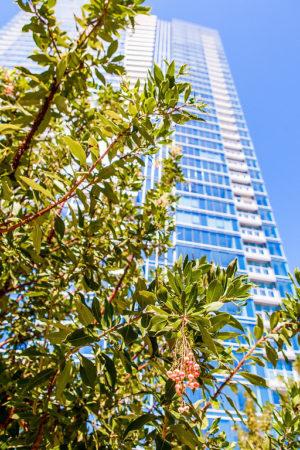 LEED Certified Buildings